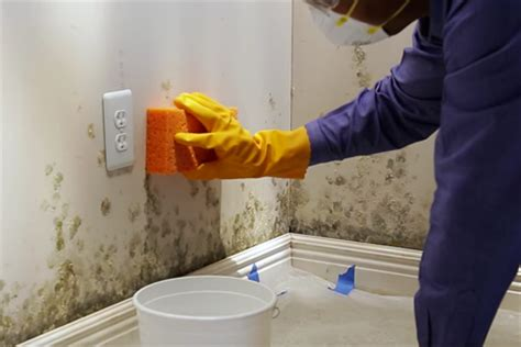 Removing Mold From Painted Walls How To Remove Mold From Wall Diy True Value Projects