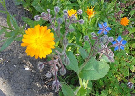 Kräuter Im Garten Oder Auf Dem Balkon Anpflanzen