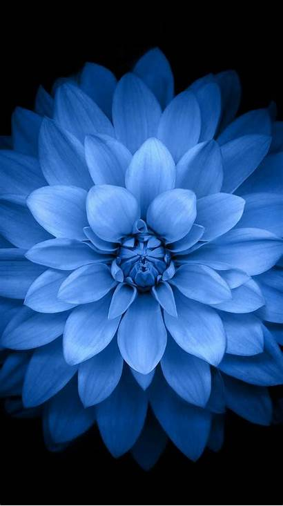 Parallax Iphone Flower Wallpapers Background Sc Apple