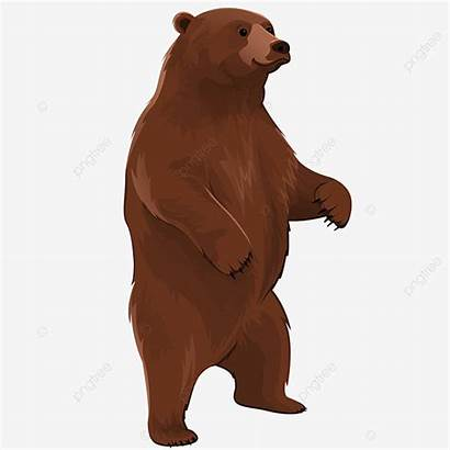 Bear Grizzly Standing Cartoon Clipart Brown Psd