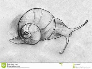 Sketch Of A Snail Stock Illustration - Image: 43099064