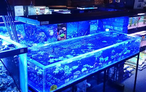 cool fish tanks 6ft ft cool white aquarium fish tank