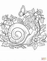 Snail Coloring Pages Printable Mollusks Dot Drawing Puzzle Paper Version Supercoloring Categories sketch template