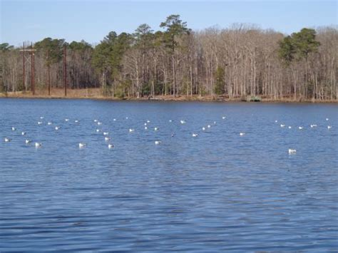 Paddle Boats Virginia Beach by Pedal Boat Rental Picture Of Newport News Park Newport