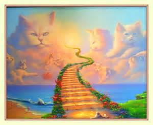 rainbow bridge for cats rainbow bridge all cats go to heaven 11x14 matted 8x10 a print