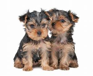 Boy Dog Names: Hundreds Of Great Naming Ideas For Males