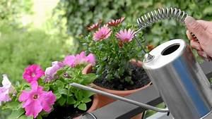 Pflanzen Gießen Urlaub : pflanzen gie en sommerliche tipps f r den garten ~ Lizthompson.info Haus und Dekorationen