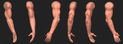 Arm Sculpt Sprunger Clint