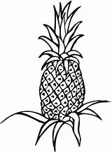 Coloring Pineapple Fruits Labels Printable sketch template