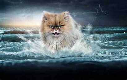 Cat Cats Wallpapers Epic Getwallpapers Sea Ocean