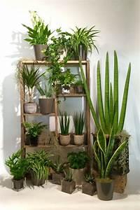Plante D Intérieur Haute : tendance les plantes d polluantes avec st phane plaza en ~ Dode.kayakingforconservation.com Idées de Décoration
