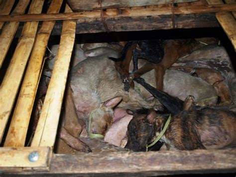 dog cat meat philippines esdaw