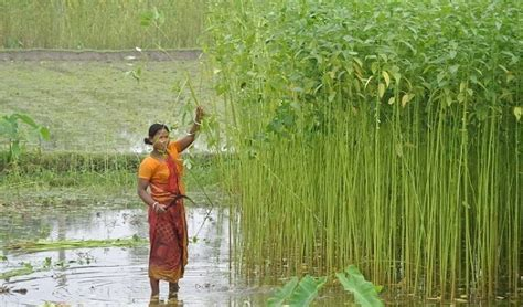 Top 10 Largest Jute Producing States In India