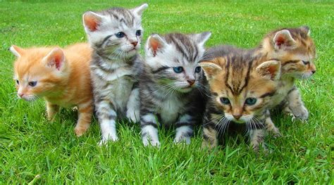 cats domestic right male female side handed study left bias biology showed behaviors females credit natural kittens sci likely jan