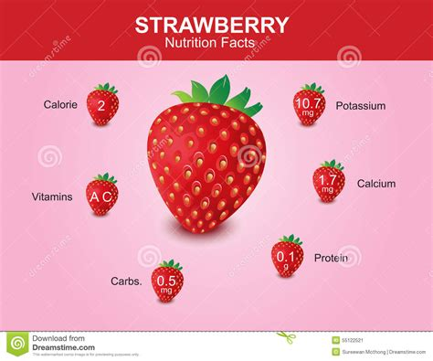 strawberry facts strawberry nutrition facts strawberry fruit with information strawberry vector stock vector