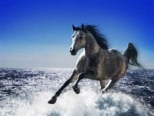 17 Best images about Horses Running Through Water on ...