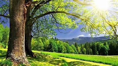 Summer Desktop Wallpapers Sunshine Backgrounds Nature Spring