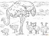 Ostrich Coloring Chicks Printable Colouring Ostriches Supercoloring Drawing Horse Animals Drawings Bird Templates Paper Printables Template 6d sketch template
