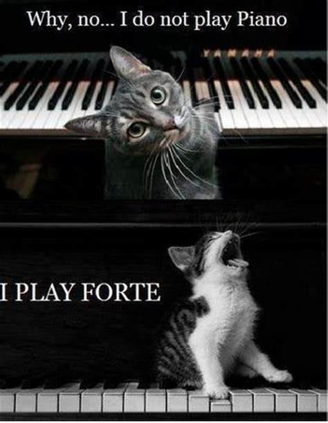 Cat Playing Piano Meme - 41 best images about music memes on pinterest music humor trombone and orchestra