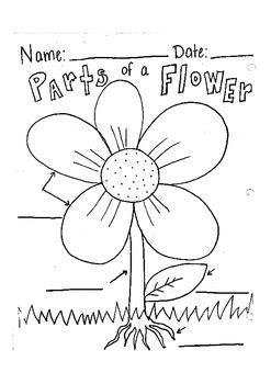 label parts   flower worksheet  robyn brooke tpt