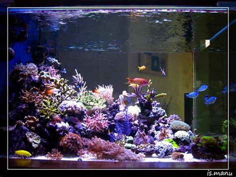 Le Led Pour Aquarium Recifal by Oules Led Pour Biotopes Artificiels Exemple De Realisations