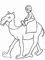Camel Coloring Pages Printable Preschool Colouring Worksheets Animals Students Enjoyable Homework Includes Section Every Age sketch template