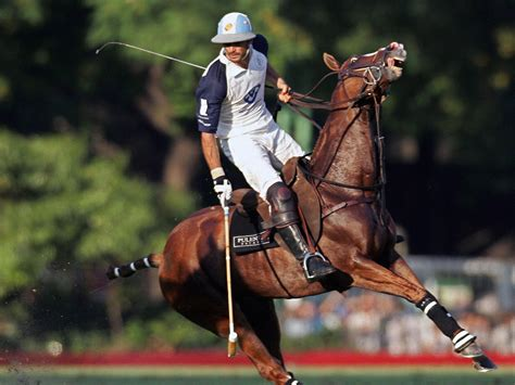 polo pony sport argentina palermo cloning open independent