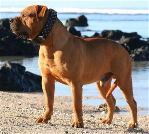 Breeds Old Bulldogs