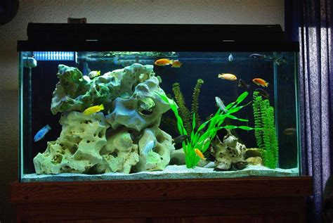 decorating your fish tank with beautiful design ideas