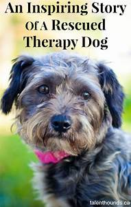An Inspiring Story Of A Rescued Therapy Dog - Talent Hounds