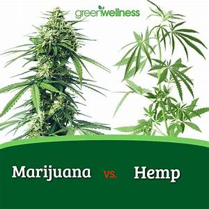 Are Hemp  U0026 Marijuana The Same Thing
