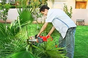 Palmen Für Draußen : teen schneiden palmen im garten stockfoto colourbox ~ Michelbontemps.com Haus und Dekorationen