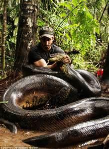 Nine-foot long anaconda terrifies Florida neighbourhood ...