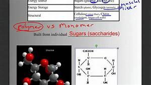 Biomolecules Part 1  Intro  Carbohydrates  And Lipids