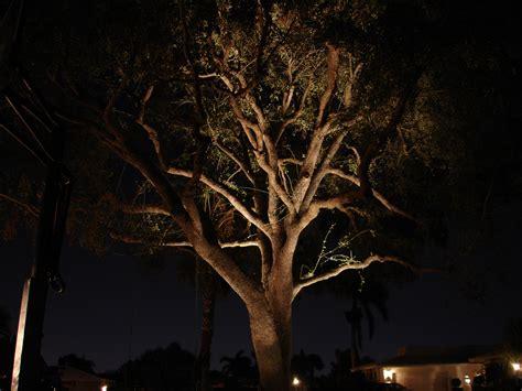 outdoor lighting for trees low voltage nitelites of jacksonville the landscape lighting