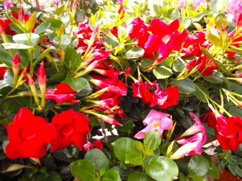 cours de cuisine thionville les plantes fleuries d exterieur 28 images les jardins