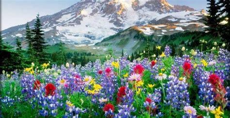 protector de pantalla de flores hermosas  movimiento