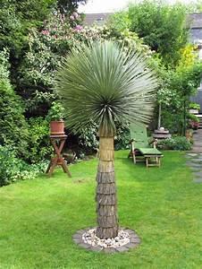 Yucca Palme Garten : palmen in d mpten ~ Lizthompson.info Haus und Dekorationen