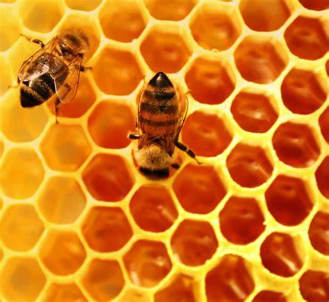 Segredo das formas do favo de mel é revelado ~ Criacionismo