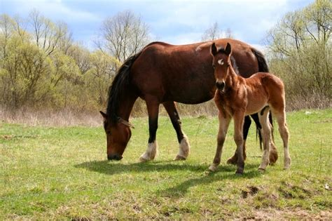 horses young managing horse weaning months pets4homes