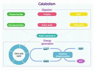 Biology Solution