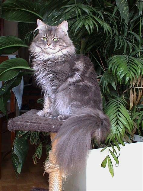 chat en lorraine rencontre