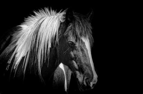 horse  stock photo public domain pictures