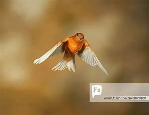Fliegen Abwehren Draußen : au en aves bei canaria domestica fauna figur fink ~ Articles-book.com Haus und Dekorationen