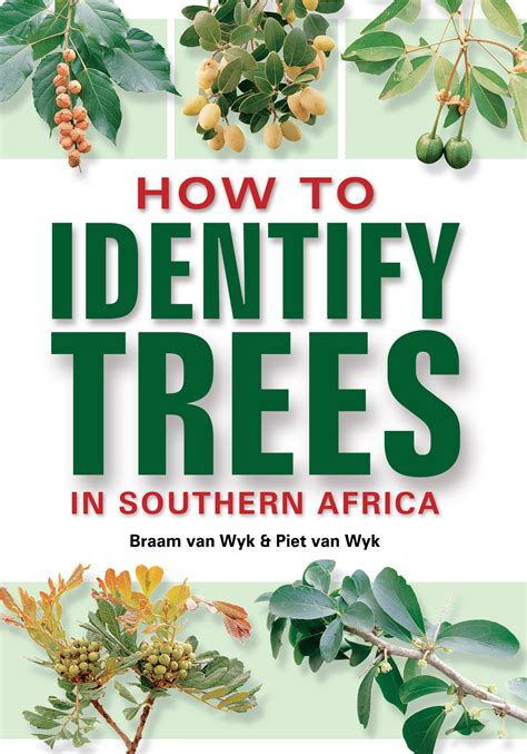 How To Identify Trees In Southern Africa By Van Wyk, Braam  Penguin Random House South Africa