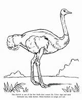 Ostrich Coloring Pages Emu Bird Cannot Fly Drawing Modified Imca Template Printable Getcolorings Getdrawings Sketch Luna sketch template