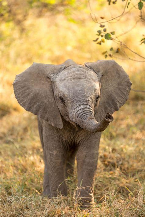 baby elephant  botswana elephants  butterflies
