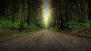 HDR Pine Forest (Dark) by pantsonnos on DeviantArt