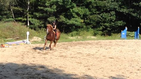 draft belgian horse jumping