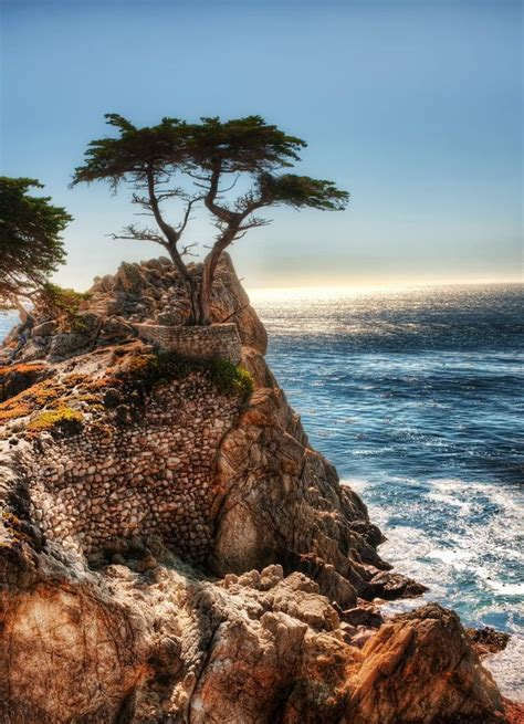 How far is san francisco from pebble beach (california)? The Lone Cypress - a drive down Highway 1 from San ...